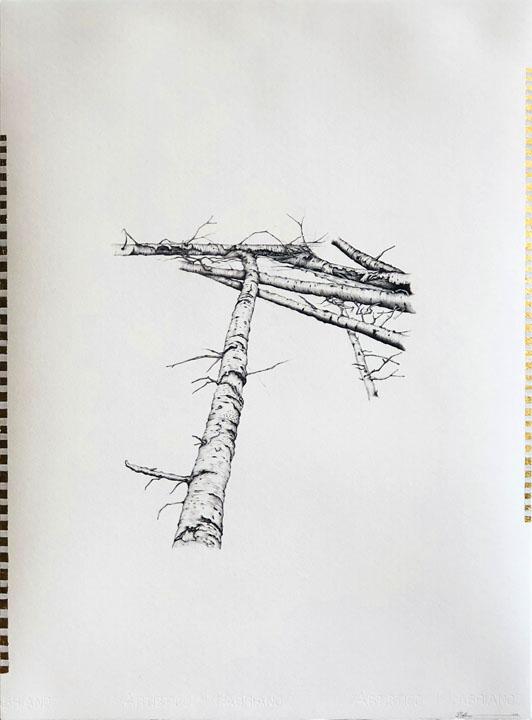Fallen Aspens